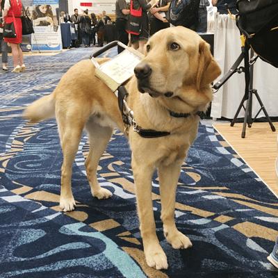 5 Service Dogs Are Wonderful Companions1492068247